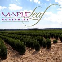 Maple Leaf Nurseries.png