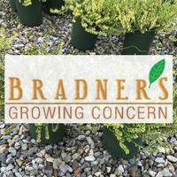 Bradners Growing Concern wholesale Nursery