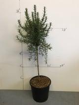 Wholesale Tree Nursery