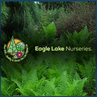 Egale Lake Nurseries graphic.png