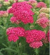 Paridon Horticultural Wholesale Nursery Plants