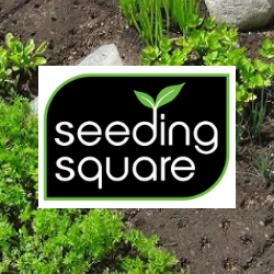 Seeding Square.png