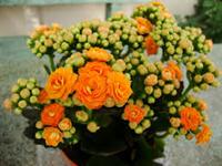West Coast Floral Growers & Distributors Flowers.png