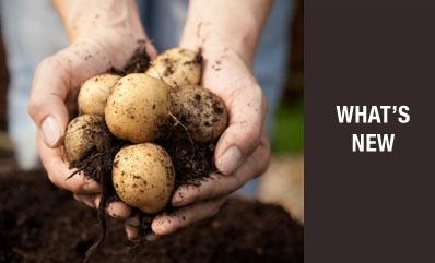 Westland garden_green_harvest_soils_