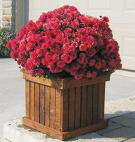 The Canadian Woodenware Manufractures Wholesale Garden Decor Planters  .png