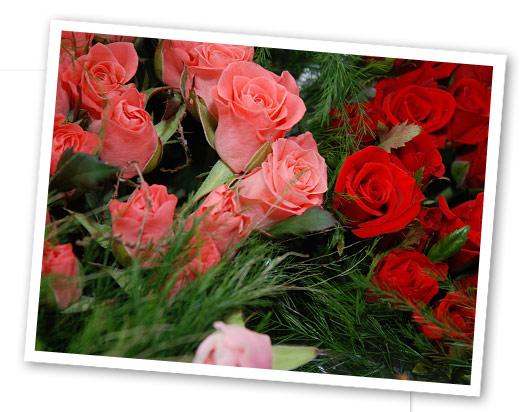 roses-sweetheart.jpg
